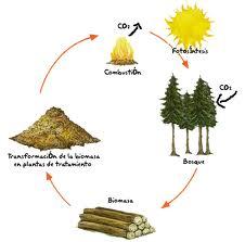 Imagen del proceso de extracción de biomasa